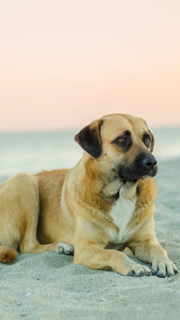 4 motivos para você tirar a licença do seu cachorro em Vancouver